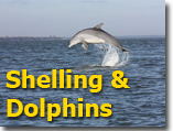 Shelling - Dolphin Trips